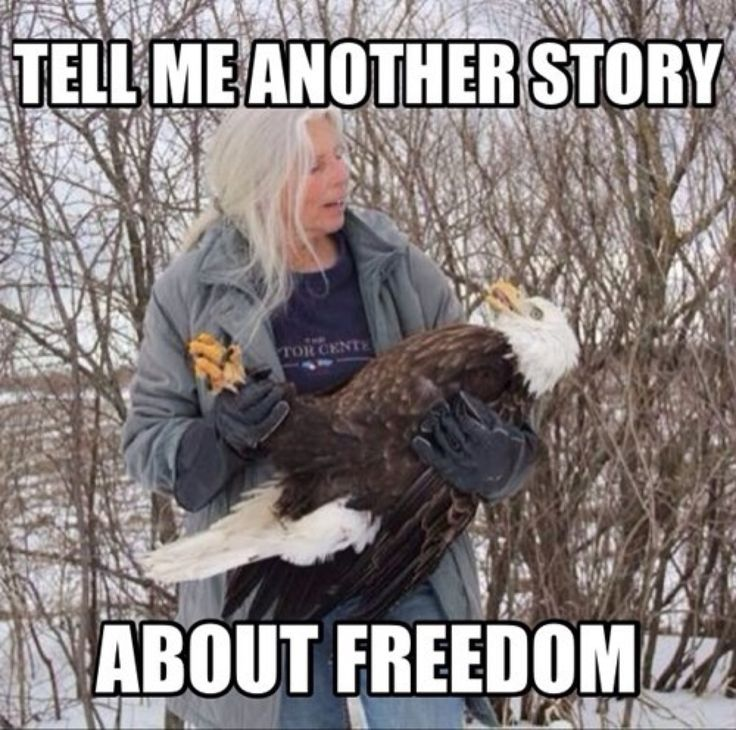 2f93a951eacc0a90d6c1053148717f63 bald eagle meme eagles memes best 20 eagles memes ideas on pinterest no signup required,Funny Eagles Meme