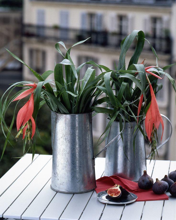Bromelia kent veel soorten bloemen.