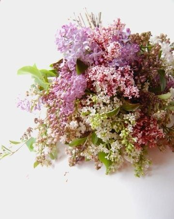 Lilacs-they used to grow like weeds near our apt growing up in Chicago. I'd fill my arms with with cut branches during the Summer and race back home. I was an odd seven year old...the oddness still continues.