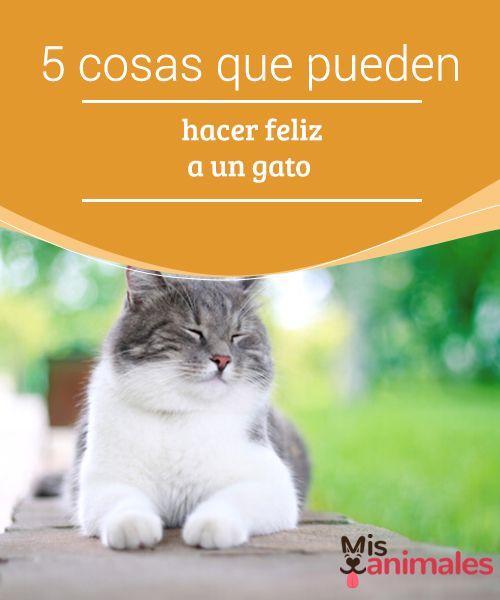 5 cosas que pueden hacer #feliz a un gato  Cuando #decidimos que un #animal pase a formar parte de nuestra familia, sin duda procuramos lo mejor para él. Y es de dueños responsables estar al tanto de las #necesidades y cuidados específicos que requiere cada mascota.