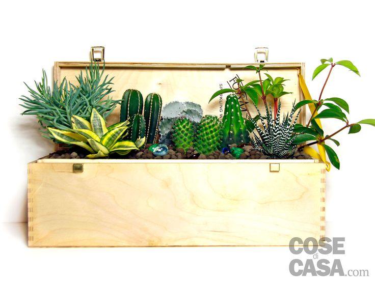 Una cassetta di legno che confezionava bottiglie di vino prezioso può essere usata come contenitore per una composizione di piante grasse. Facile da fare e da mantenere perché le piante grasse richiedono poca acqua e cure.