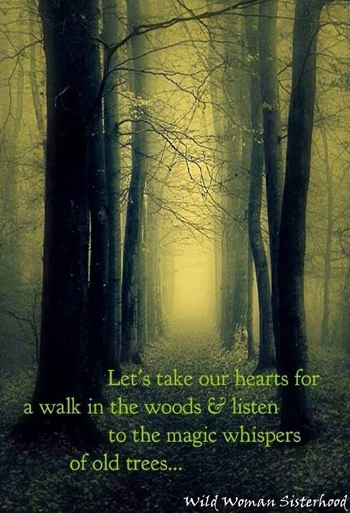 Let's take our hearts for a walk in the woods  & listen to the magic whispers of old trees...