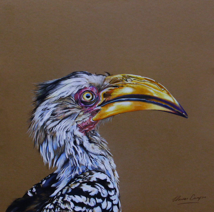 Southern Yellow-billed Hornbill done in pastel on board.