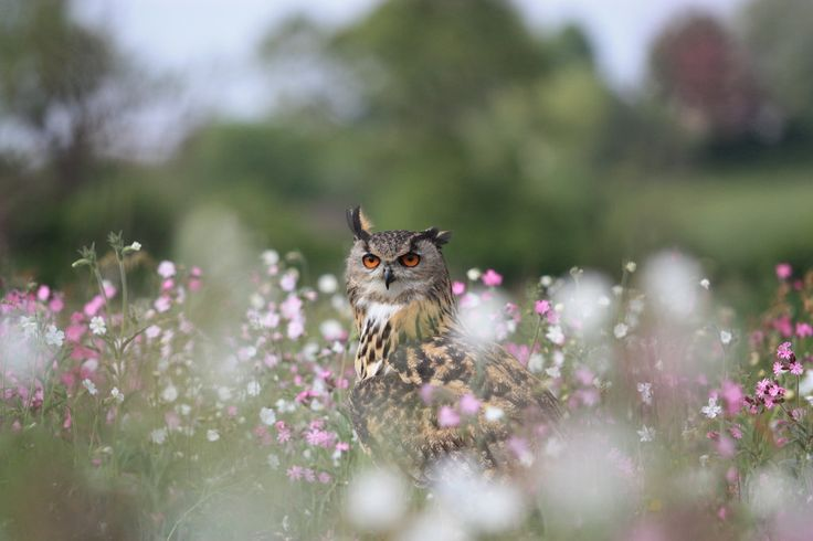 Owl in meadow flowers by ~AngiNelson on deviantART