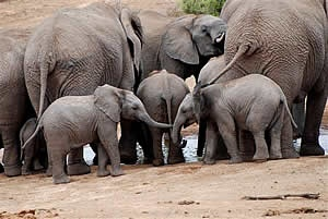 A favourite place to visit: Addo Elephant Park