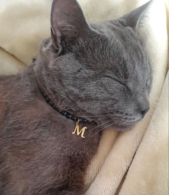Cat Collar Tag Personalized Cat Collar Id Cat Initial Collar Cat Name Tag Collar For Custom Cat Tag Custom Collar For Cat Tag Cat Tags Cat Tags Collar Cat Mom