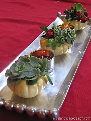 Wouldn't these cute little succulent pumpkins look great on a Thanksgiving table?