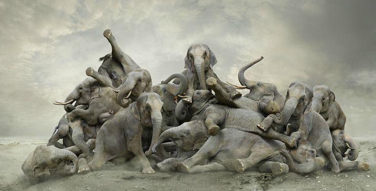 Elefantes revueltos