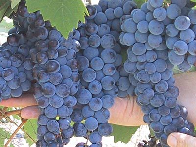 Argentina News on Vineyard, Fincas, Farms & Land for Sale in Mendoza