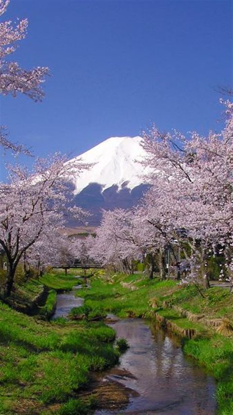 Cherry Blossoms and Mountain Fuji, Japan.I want to go see this place one day. Please check out my website Thanks. www.photopix.co.nz