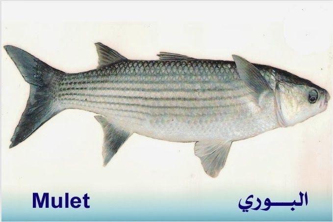 تعريف اسماء الاسماك بدلجة المغربية و الفرنسية البحار المغربي Fish Blog Posts