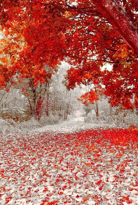 First Snowfall, Duluth, Minnesota sus colores son una belleza arboles y flores que hermosa combinacion