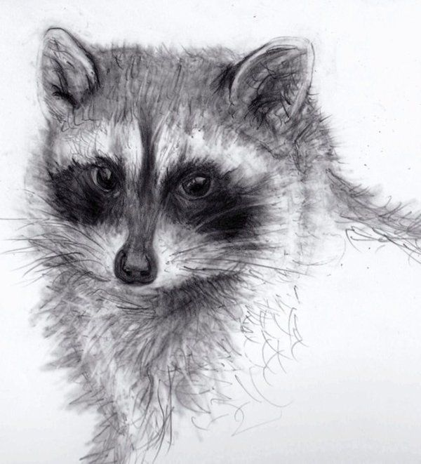 Best 25+ Pencil drawings of animals ideas on Pinterest | Animal ...