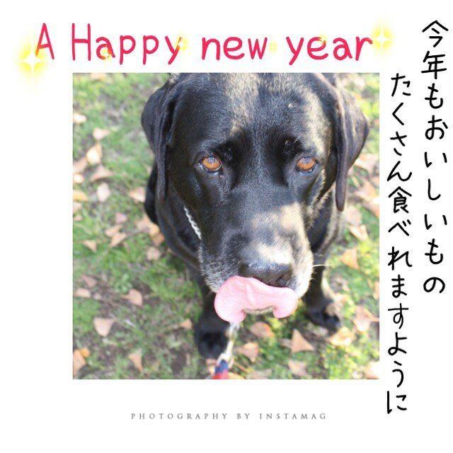 あけましておめでとうございます✨ ▷ 幸多き一年でありますように。 ▷ 今年もよろしくお願いします ▷ あけましておめでとうございます  ahappynewyear 今年も