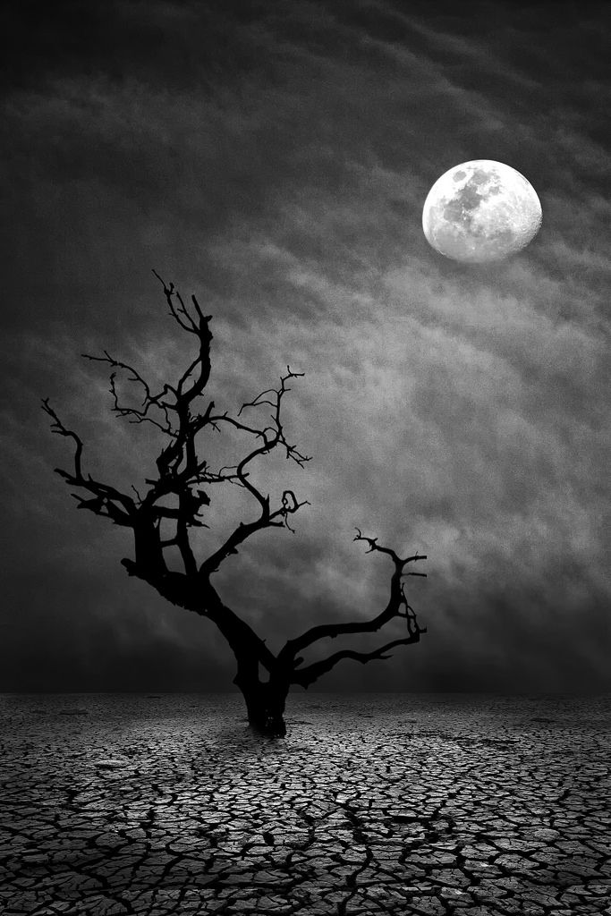 ~~Lonely Night | moon and lone tree monochrome | by ...