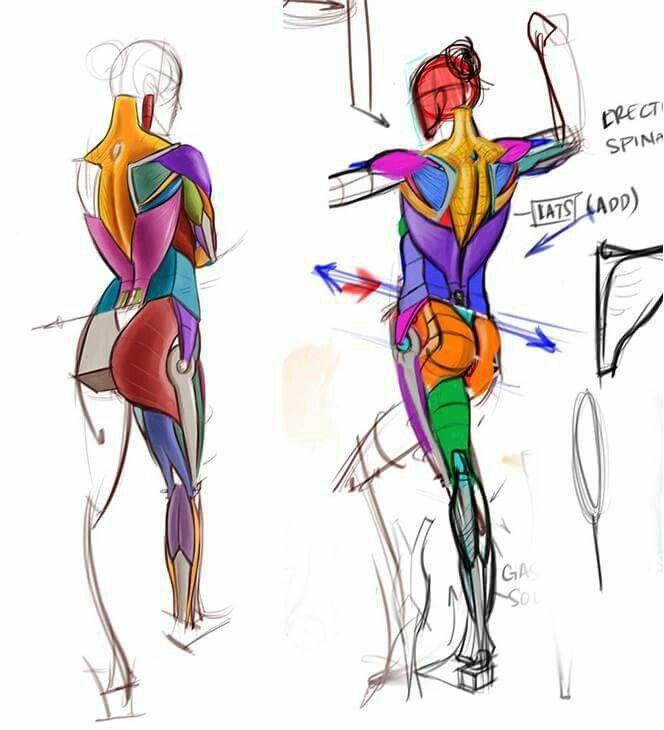 Ziemlich Keith Moore Anatomie Ideen - Anatomie Von Menschlichen ...
