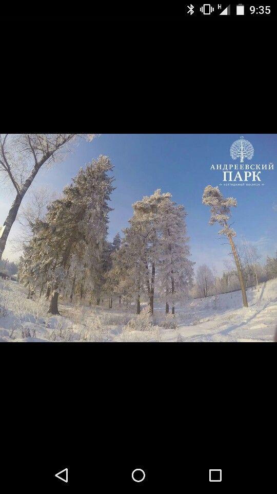 Природа Андреевского Парка