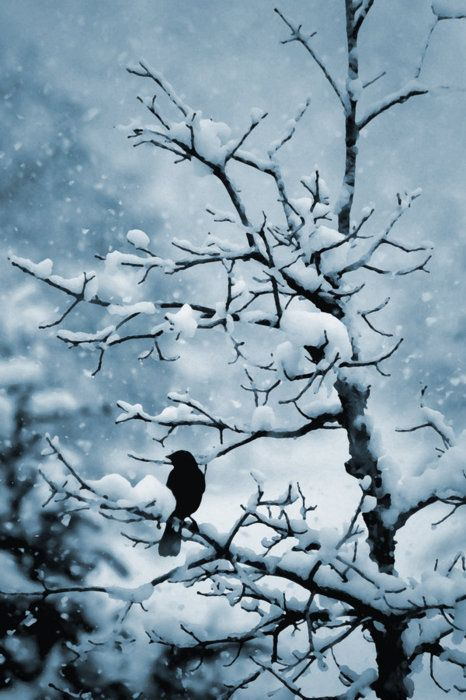 Bird in snowy tree.