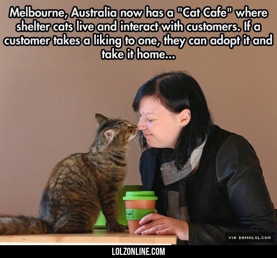 The Cat Cafe In Melbourne #lol #haha #funny