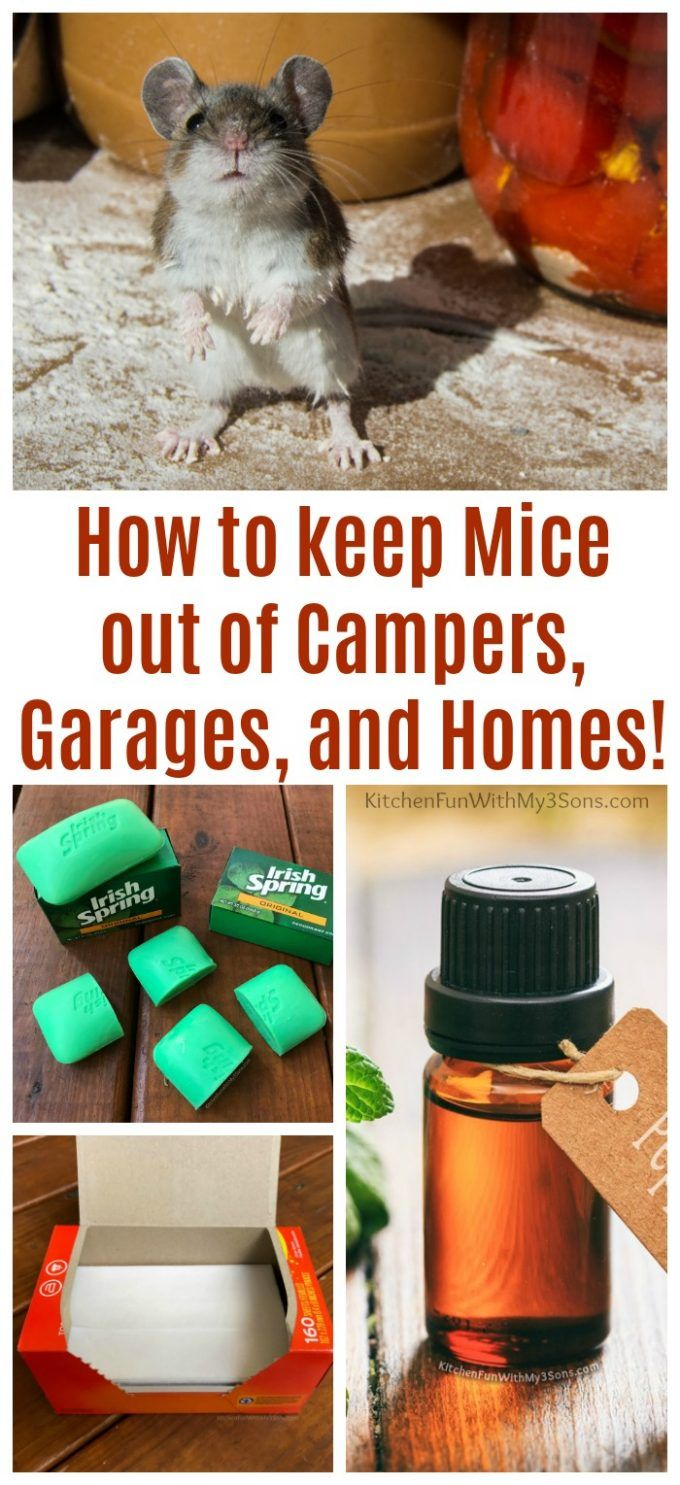 The Best Ways To Keep Mice Out Of Campers Camper Kitchen Camper Hacks Rv Camping