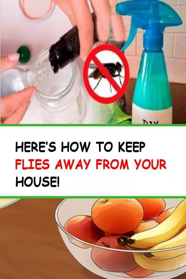 Here's how to keep flies away from your house! #Bugs