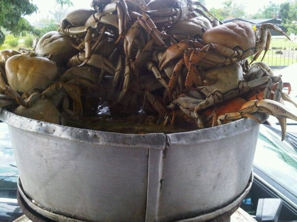 Good Morning/Good Afternoon - BOILED CRABS #Jamaica Style - whats on your lunch menu today?