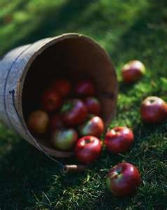 Apple picking and hay rides...then we can make homemade cider or apple pie