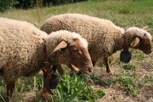 Madi e Monet le nostre pecorelle