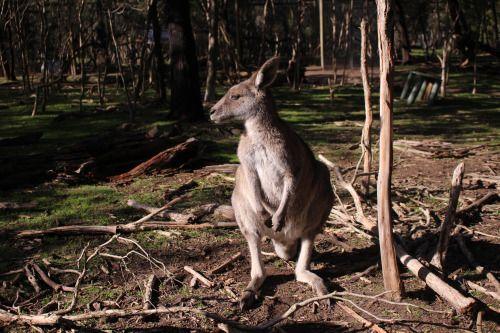 Melbourne: Moonlit SanctuaryJuly 19, 2015 / Meet the beloved locals of Australia!