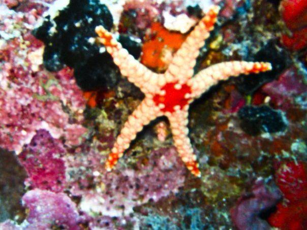 #starfish #maldives