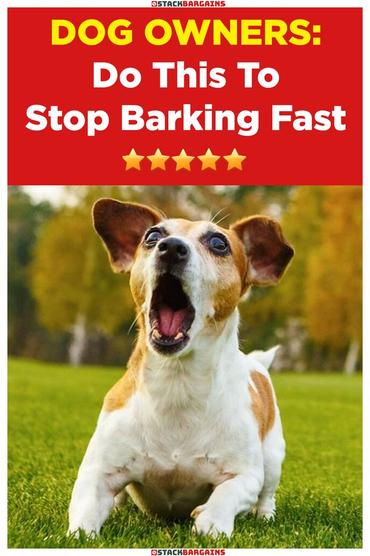Do this to stop barking fast stop dog barking