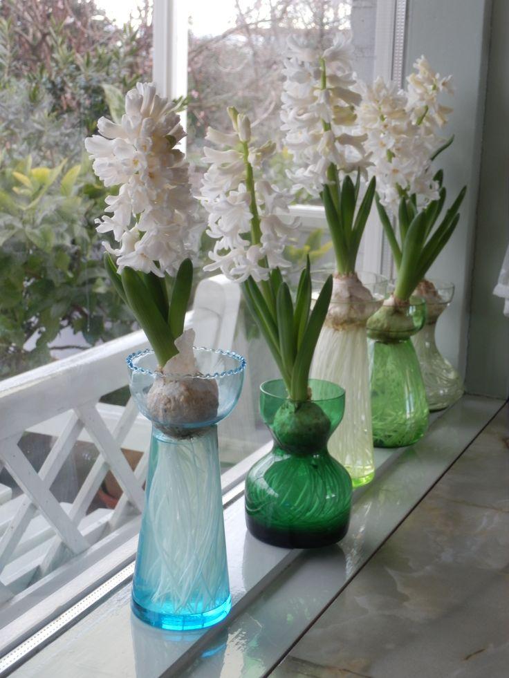 Witte hyacinten op glas. www.bordercollieinderozentuin.blogspot.nl