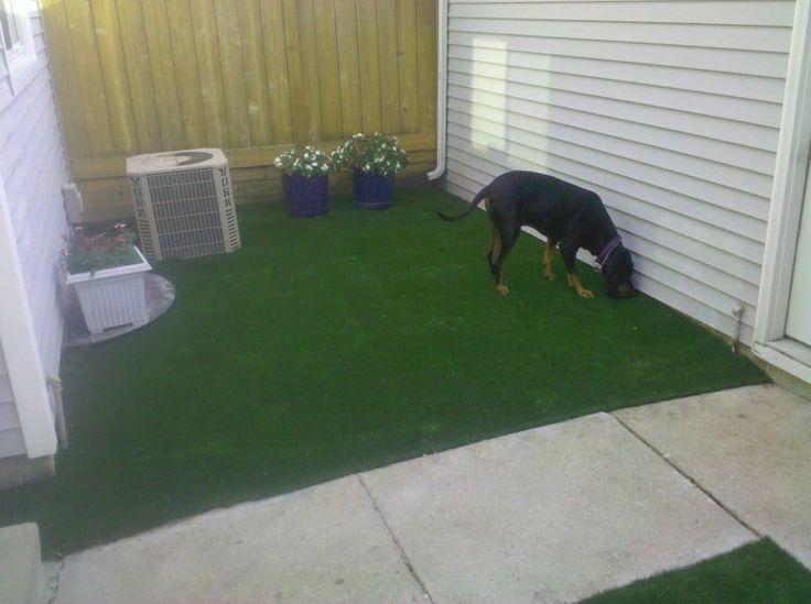 Good Cuby Chubby Adorable Dog - 2f99f584c6ce590745d6d3f76983400e  Collection_131513  .jpg