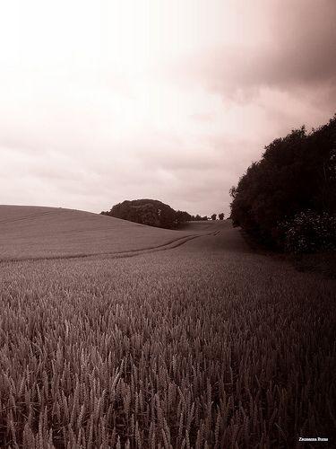Landscape Skåne Sweden