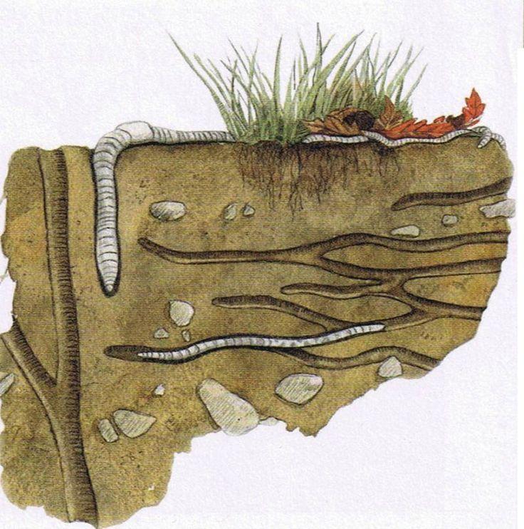 Que fait le vers de terre sous nos pieds ?                                                                                                                                                                                 Plus