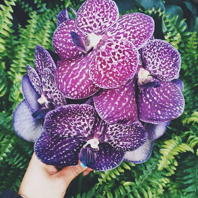 Orhideele mov sunt o splendoare! Pot fi folosite cu succes in buchete sau aranjamente florale elegante. Beautiful purple orchids. Perfect for elegant flower bouquets or floral arrangements.