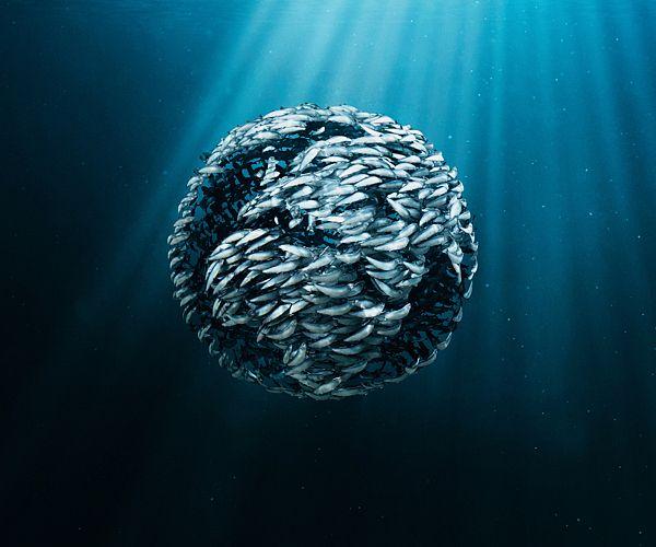 Marine Stewardship Council by Act2-Um
