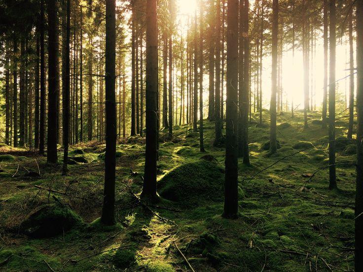 www.biobasedworldnews.com hubfs Forest.jpg?t=1483550006100