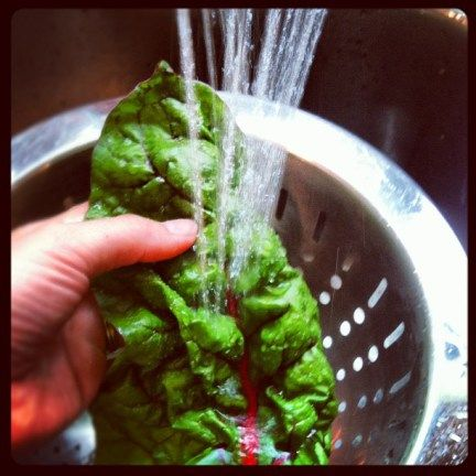 dehydrating Swiss Chard for chips