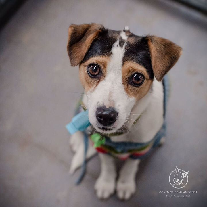 Now doesn't this face just melt your heart? This is little Loxie who I met at Renbury Farm Animal Shelter yesterday. She is my kind of dog... such a sweet and fragile little dog. She is quite timid at first, but soon warms to you once she trusts you. A li