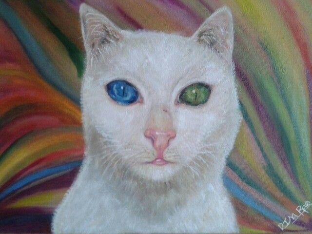 Gato ojos colores- DISA RESTREPO