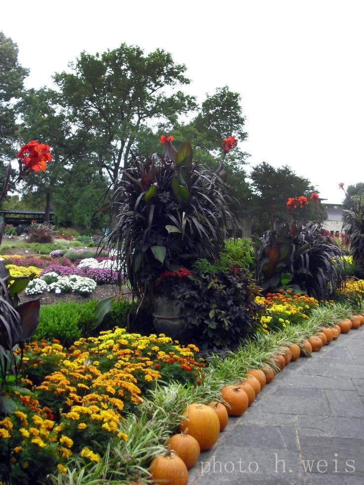 Dallas arboretum dallas arboretum pinterest pumpkins - Botanic gardens pumpkin festival ...