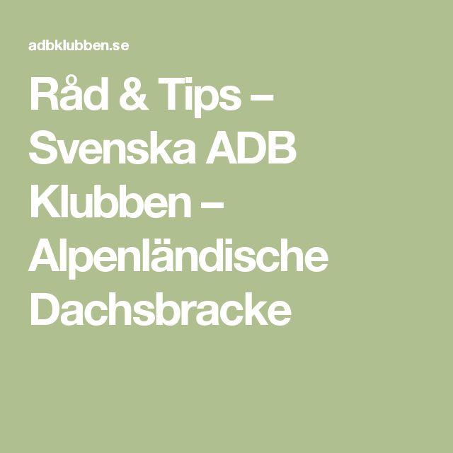 Råd & Tips – Svenska ADB Klubben – Alpenländische Dachsbracke