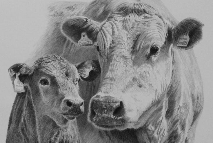 Cow Head Pencil Drawing Cow head penci | Art for Em ...