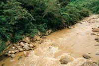 La deforestaci�n es la causa del aumento del caudal de los r�os en las �pocas de lluvia.
