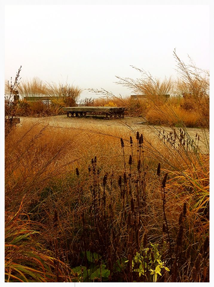 73 best plants autumn winter images on pinterest for Piet oudolf fall winter spring summer fall