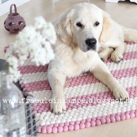 Vi elsker både teppet og hunden!