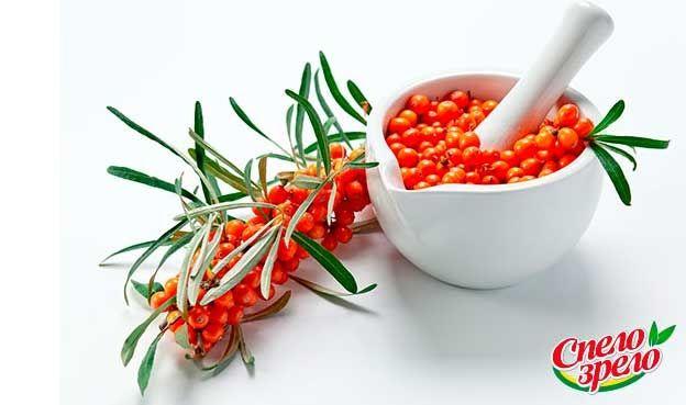 Полезные свойства облепихи. Если бы нужно было составить список самых полезных ягод, которые произрастают в российских широтах, то его, несомненно, возглавила бы облепиха. Эта замечательная культура щедра не только на урожай, но и на полезные свойства. http://www.spelo-zrelo.ru/poleznoe/svoistva/polza-i-vred-oblepihi/