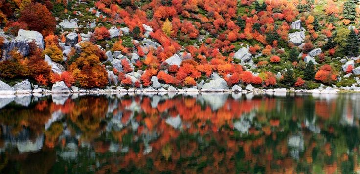 imagen_blog_viajes_bosques-en-otoño_urbion