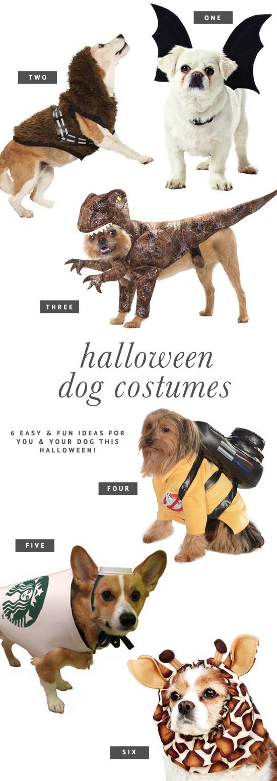 halloween costume dog and owner